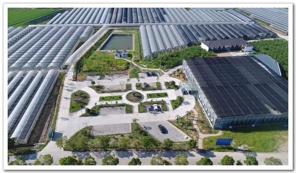 流转土地面积200亩,主要种植猕猴桃,水蜜桃,葡萄,草莓,桑葚,火龙果等图片